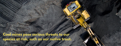 Copy-of-Canada-agrees-federal-impact-assessment-needed-for-thermal-coal-mine-in-Alberta-1.png