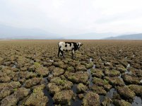 CHILE-DROUGHT_87139574-scaled-e1629995248673[1].jpg